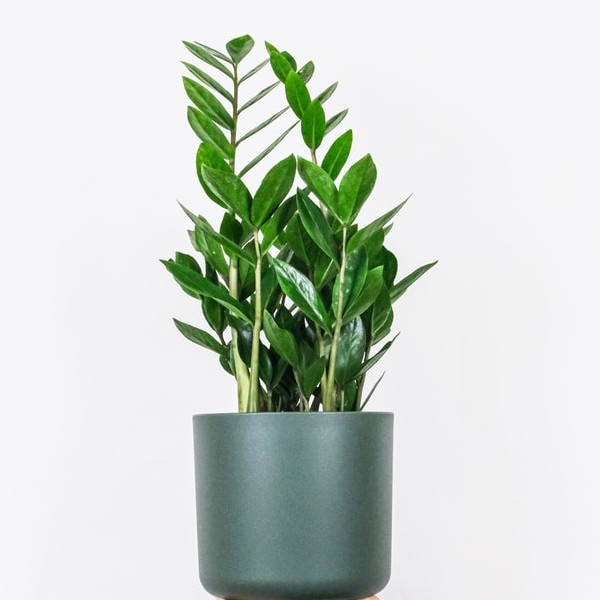 Houseplant in a grey pot