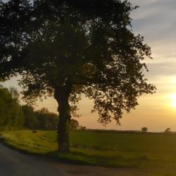 oak tree against sunny sky